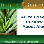 All You Need to Know About Aloe