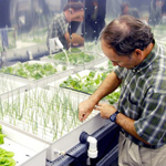 Growing plants without dirt