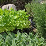Medicinal Herbal Kitchen Garden