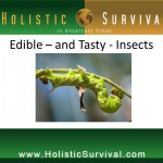 Edible - and Tasty - Insects